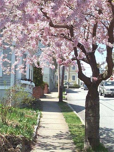 Spring on King Street